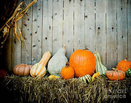 Sonja Quintero - Pumpkin Fence
