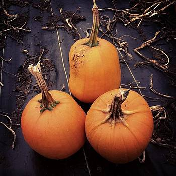 Pumpkin Patch by Virginia Cortland