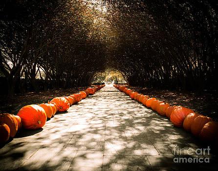 Sonja Quintero - Pumpkin Path