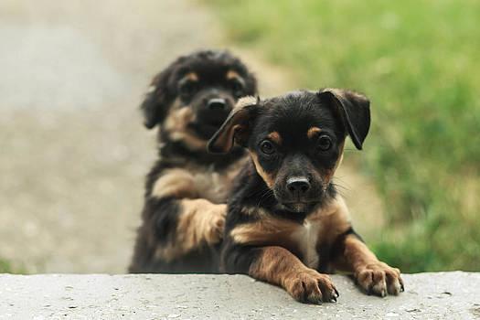 Puppies by Sorin Iana