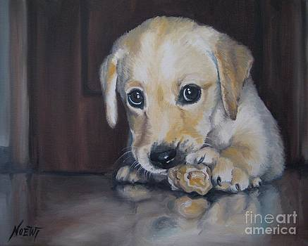 Jindra Noewi - Puppy Aaron