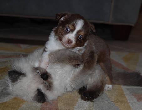 Puppy Kitten Play by Kasie Morgan