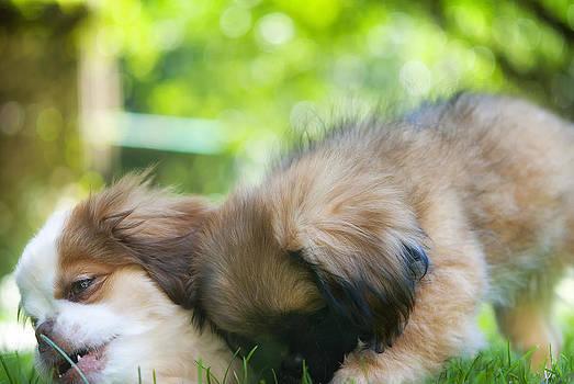 Puppy Love by Ryan Manuel