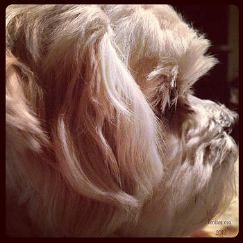 Puppy Profile by Heather Ann Myers
