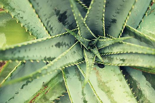 The Pure Aloe by Barbara Ki