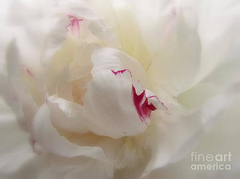 Pure as .. by Nancy Dole McGuigan