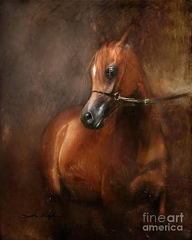Pure Breed by Dorota Kudyba