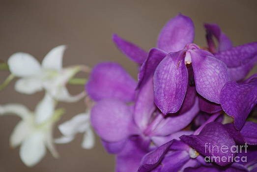 Purple and White by George Mount