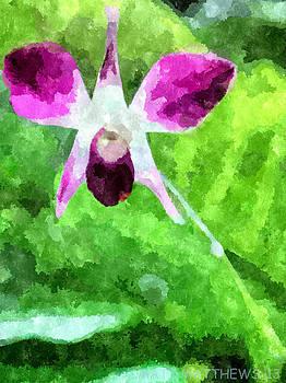 Purple And White Orchid by Matt Matthews