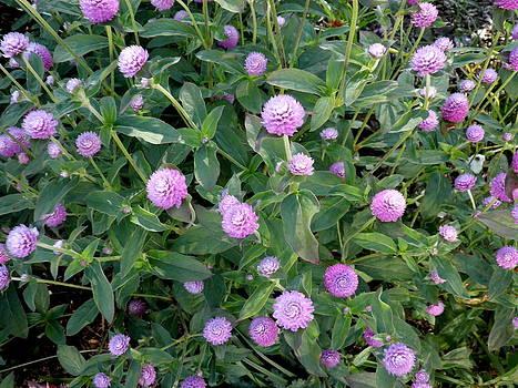 Kate Gallagher - Purple Autumn Flowers