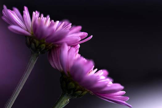 Purple beauty by Ann-Charlotte Fjaerevik