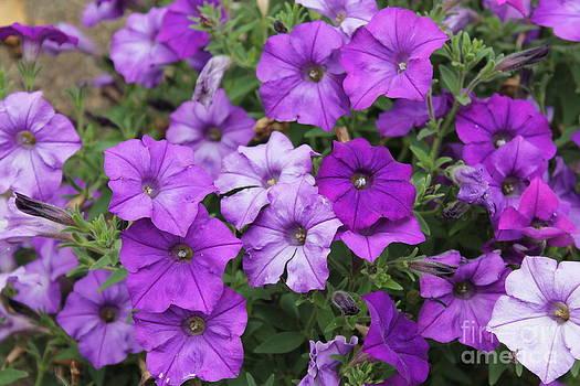 Purple Beauty by Teresa Thomas