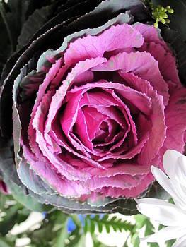 Purple  Brassica Oleracea 2 by Carolyn Mortensen