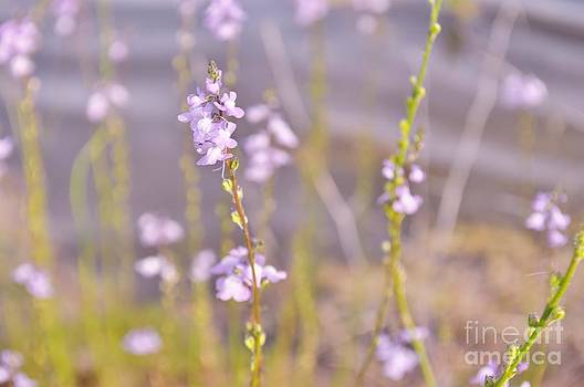 Purple Breeze by Heather Beck
