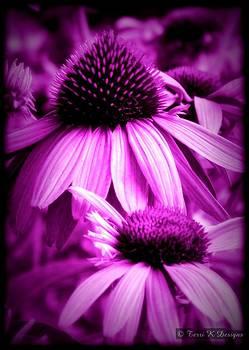 Purple Cone by Terri K Designs