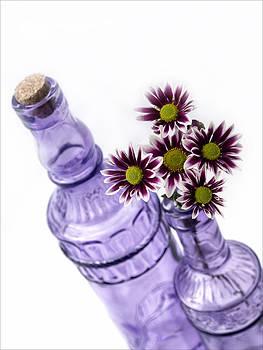 Purple Daisies  by Kim Andelkovic