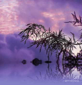 Purple Dream by Zsuzsa Lado