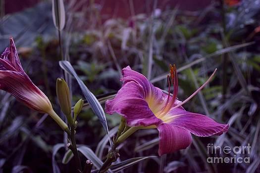Purple Fling by Virginia Pakkala