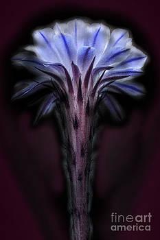 Purple Flower by Ann-Charlotte Fjaerevik