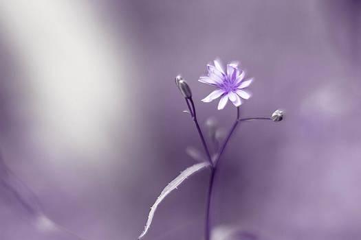 Purple Flower by Danielle Silveira