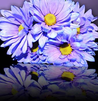 Cindy Boyd - Purple Flower Reflection