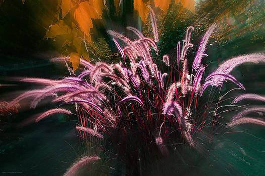Mick Anderson - Purple Fountain Grass Fantasy