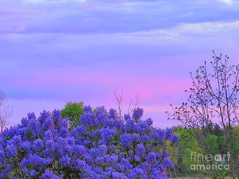 Purple Haze by David Lankton