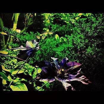 #purple #haze #garden #flower #leaf by Shawn Who
