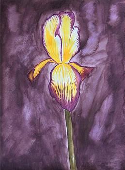 Purple Iris by AR Annahita