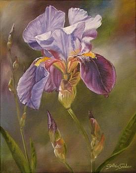 Purple Iris by Cynthia Snider