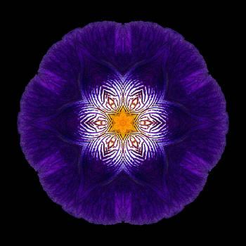 Purple Iris II Flower Mandala by David J Bookbinder