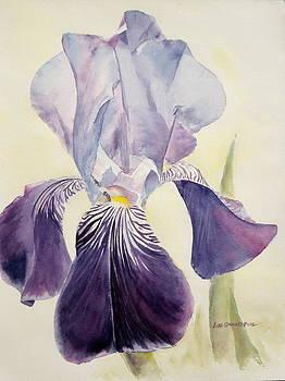 Purple Iris by Lisa Pope