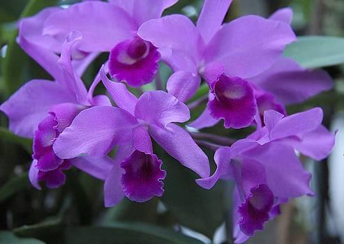 Purple Lady by Ajithaa Edirimane