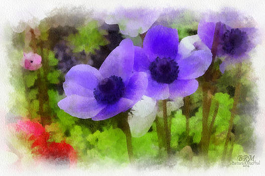 Purple Me Soft by Barbara R MacPhail