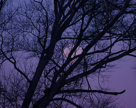 Purple Moon Set by Tina Stoffel