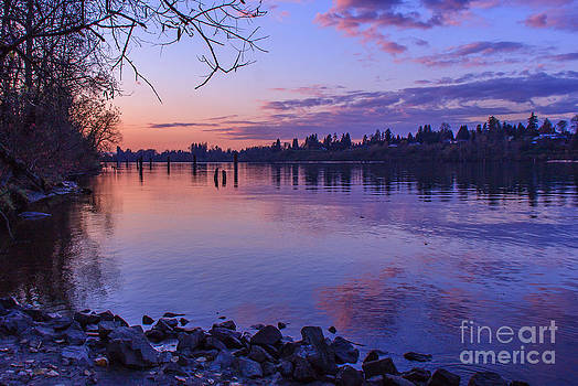 Purple Oasis by Nancy Harrison