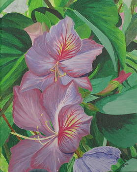 Purple Orchid Tree by Hilda and Jose Garrancho