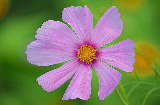 Purple Passion Flower  by Making Memories Photography LLC