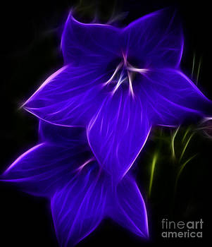 Purple Passion by Joann Copeland-Paul