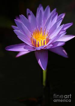 Sabrina L Ryan - Purple Petals