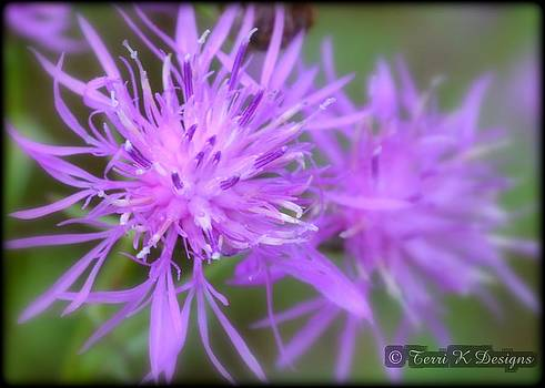 Purple Point by Terri K Designs