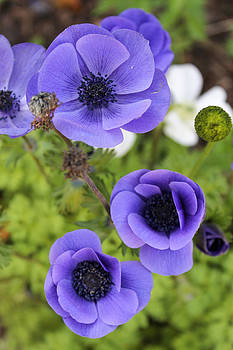 Purple Power by Hannah Miller