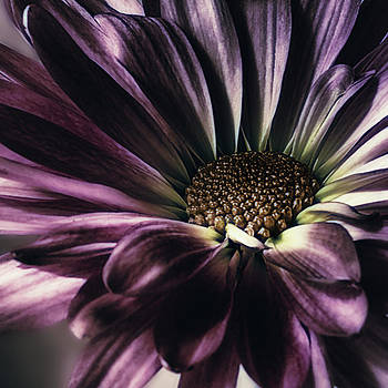 Purple Reign by Darlene Kwiatkowski