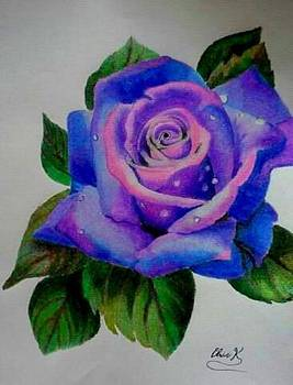 Purple Rose by Christopher Kyle