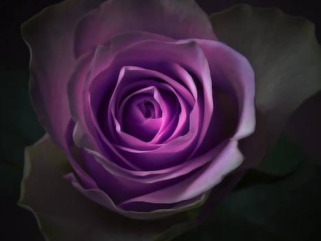 Purple Rose Flower - Macro Flower Photograph by Artecco Fine Art Photography