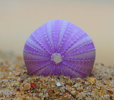 Purple Sea Urchin 2 by Cathy Lindsey