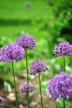 Purple Spring by Daphne Duddleston