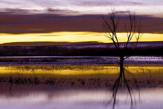 Purple Sunrise on the Bosque by Kristal Kraft