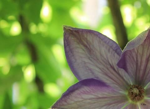Purple by Thomas Leon