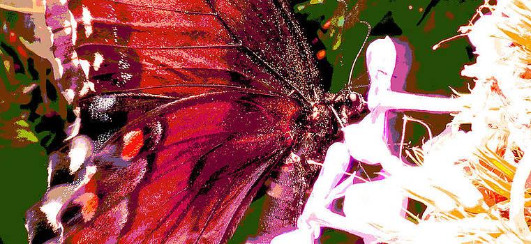 Purple Wings Two by Walter Klockers
